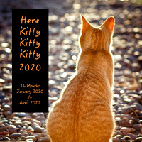View: Here Kitty Kitty Kitty  2020 Wall Calendar / Accepting Orders Now / Early December Delivery