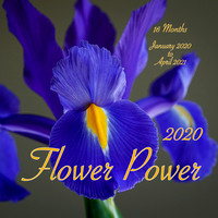 Flower Power 2020 Wall Calendar / Accepting Orders Now / Early December Delivery